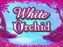 igrovoy-avtomat-white-orchid